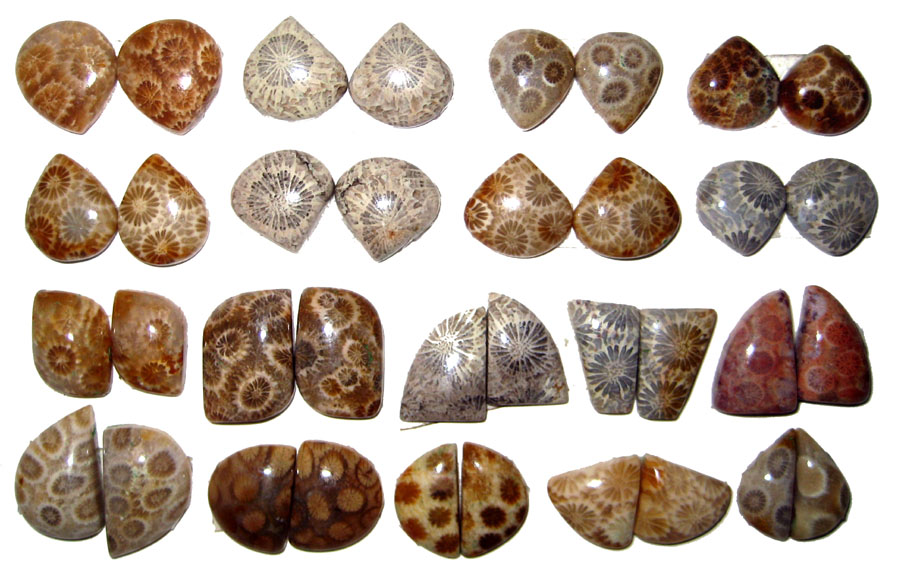 Fossil Coral Cabochon